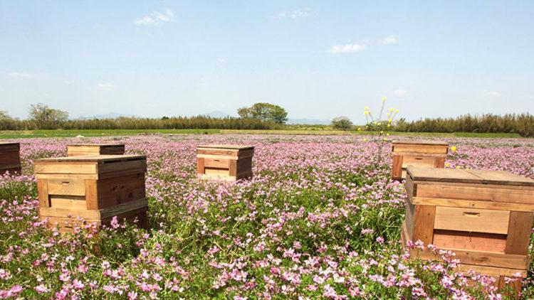 ARTISAN -水谷養蜂園