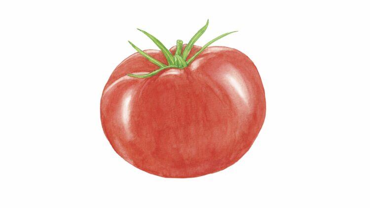 トマトの真実